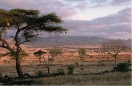 [image - savanna grassland in Africa]